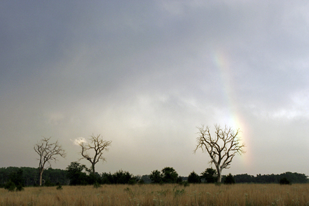 Three Tree Rainbow